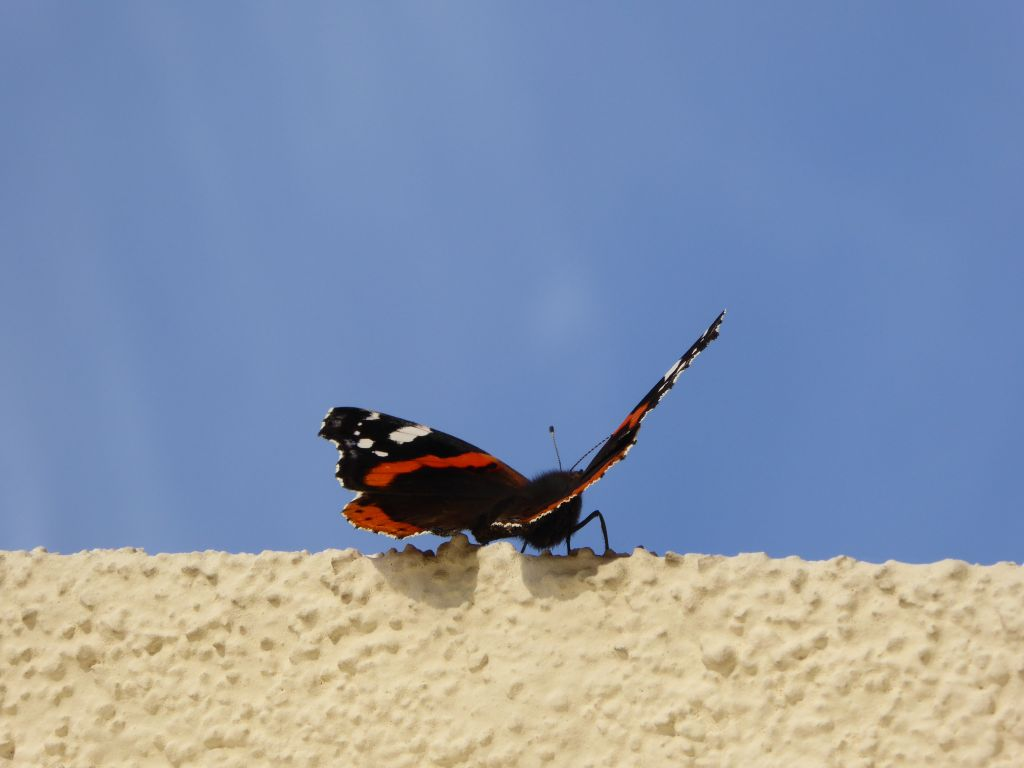 es bl ht es gr nt es fruchtet seite 2686 forum. Black Bedroom Furniture Sets. Home Design Ideas