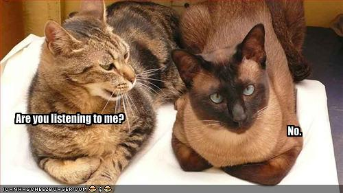 funny-pictures-two-cats-bicker.jpg